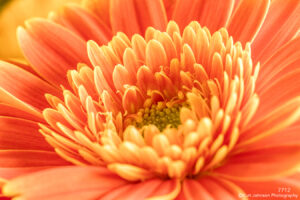 flower orange petals details close up abstract