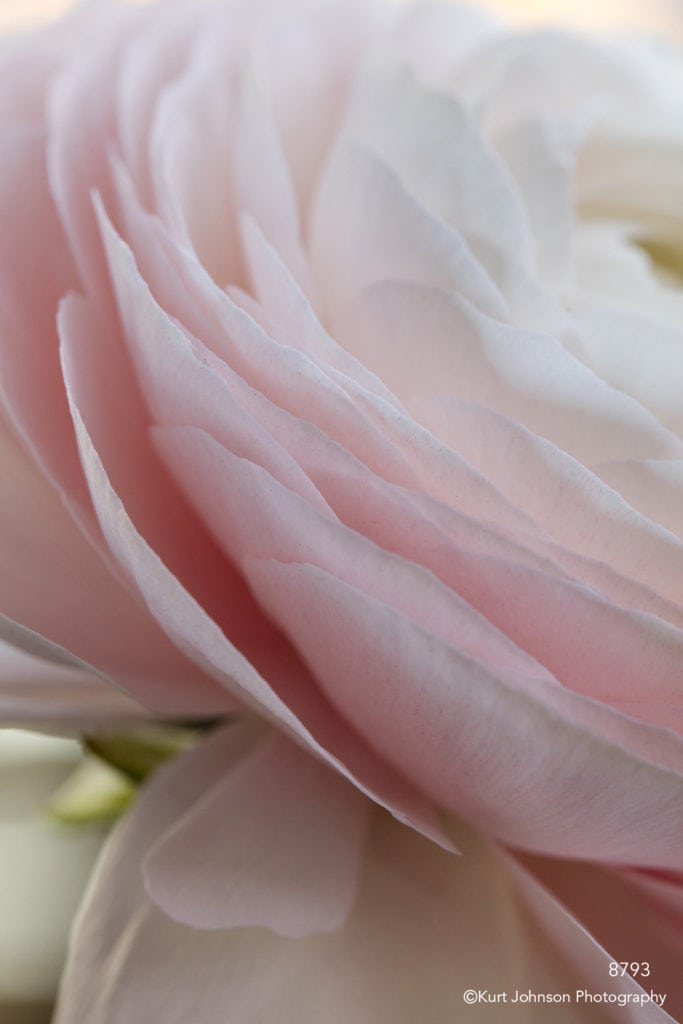 flower pink petals abstract lines