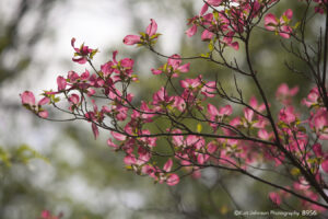flower pink flowering tree branches