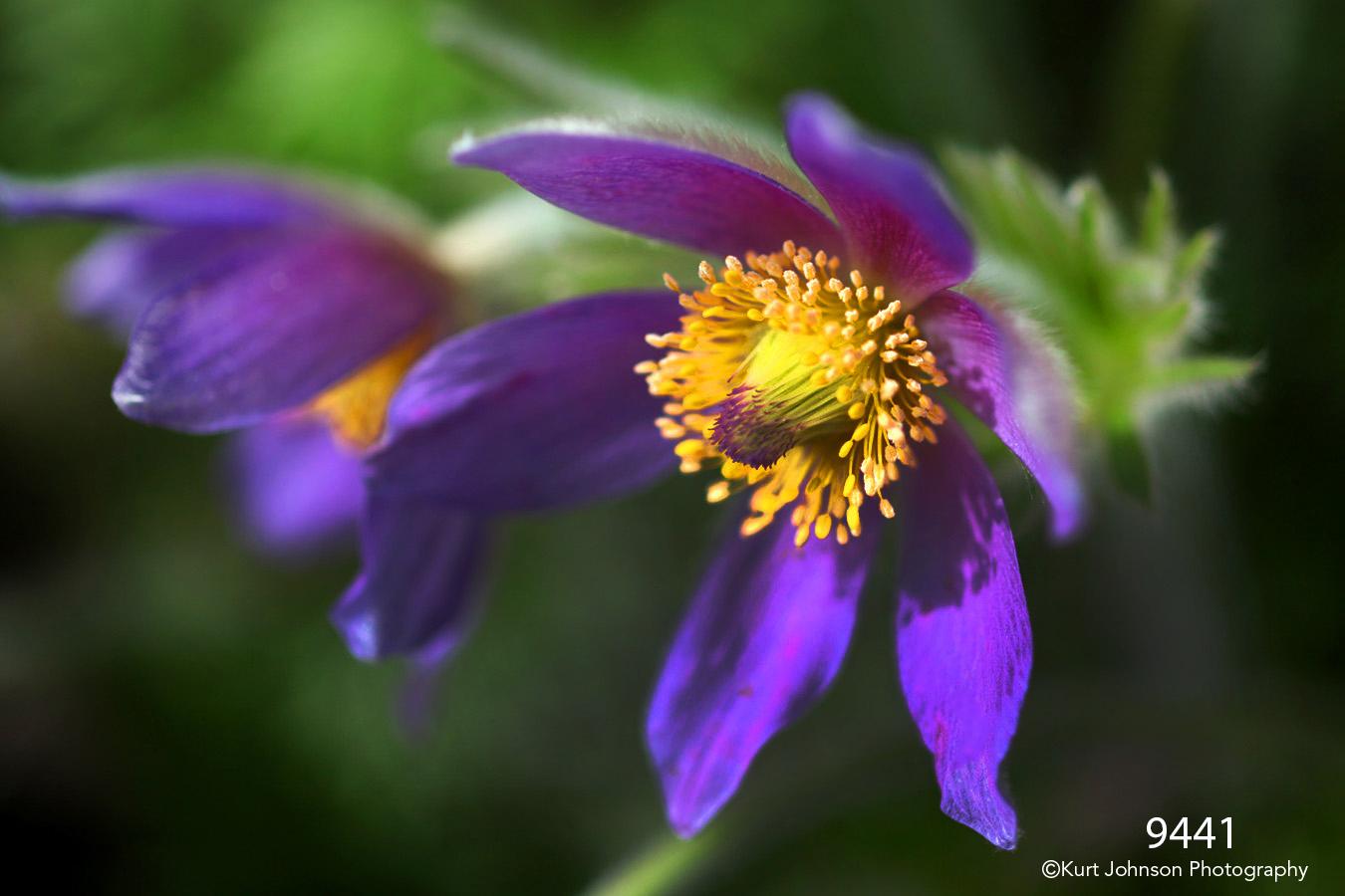 flower purple flowers green