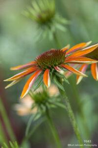 flower orange green daisy