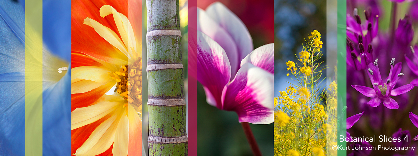 botanicals flowers slices abstract