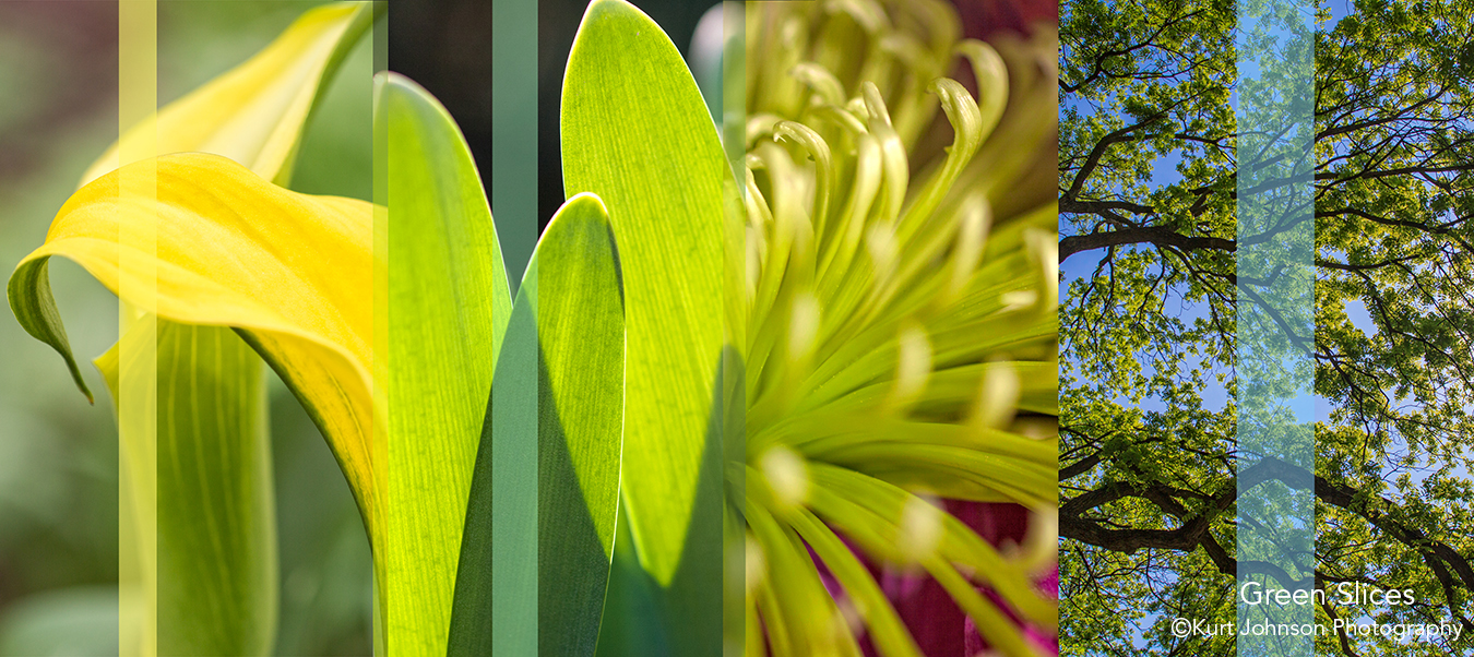 botanicals flowers slices abstract green
