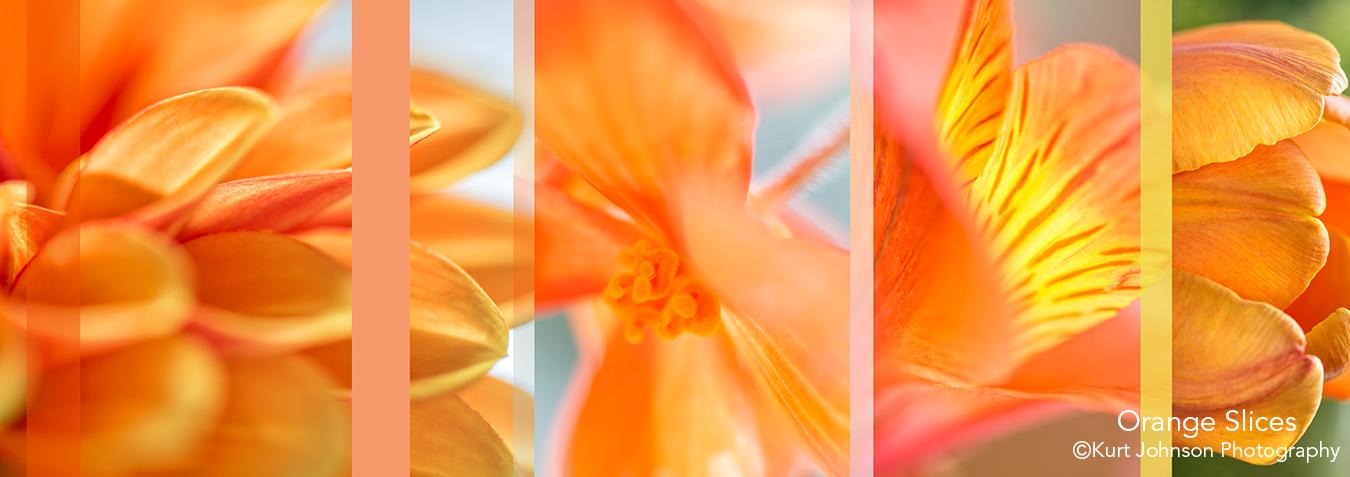 botanicals flowers slices abstract orange