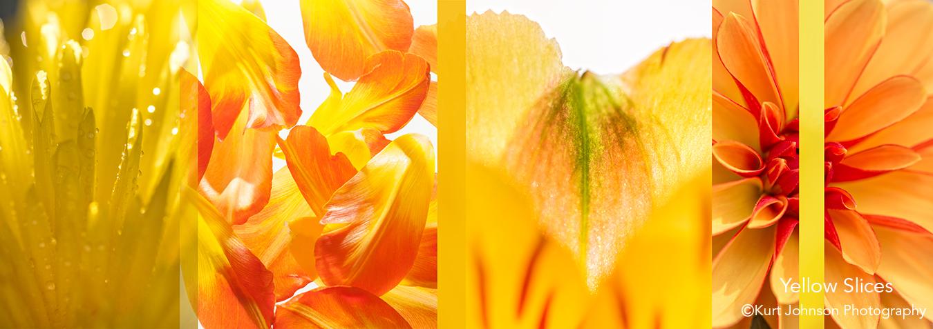 botanicals flowers slices abstract yellow interpretations