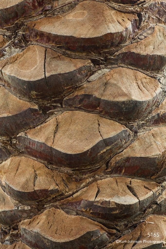 trees bark texture trunk brown earth tone
