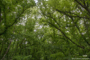 trees green forest woods landscape