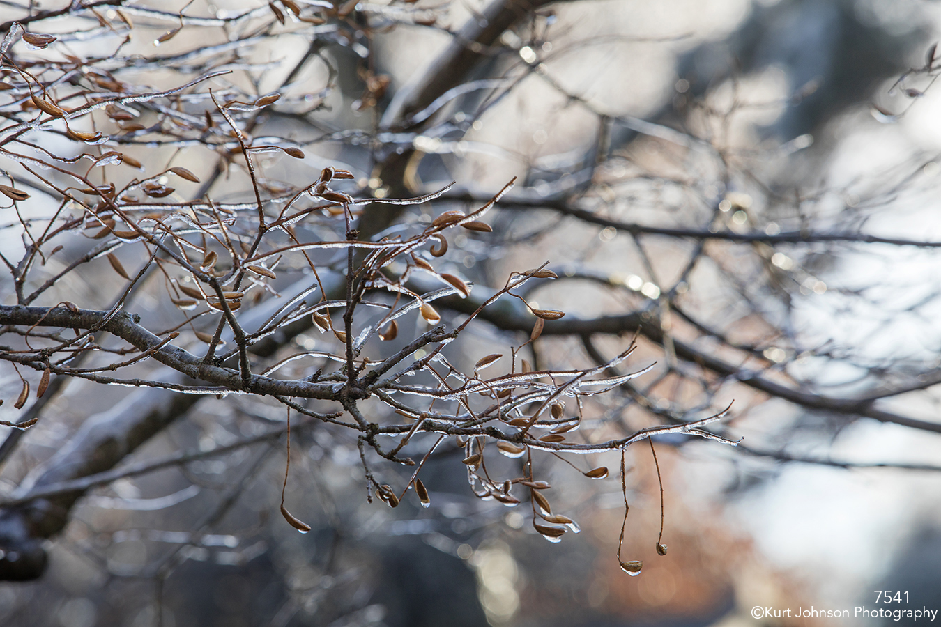 trees frost winter leaves ice brown earth tones