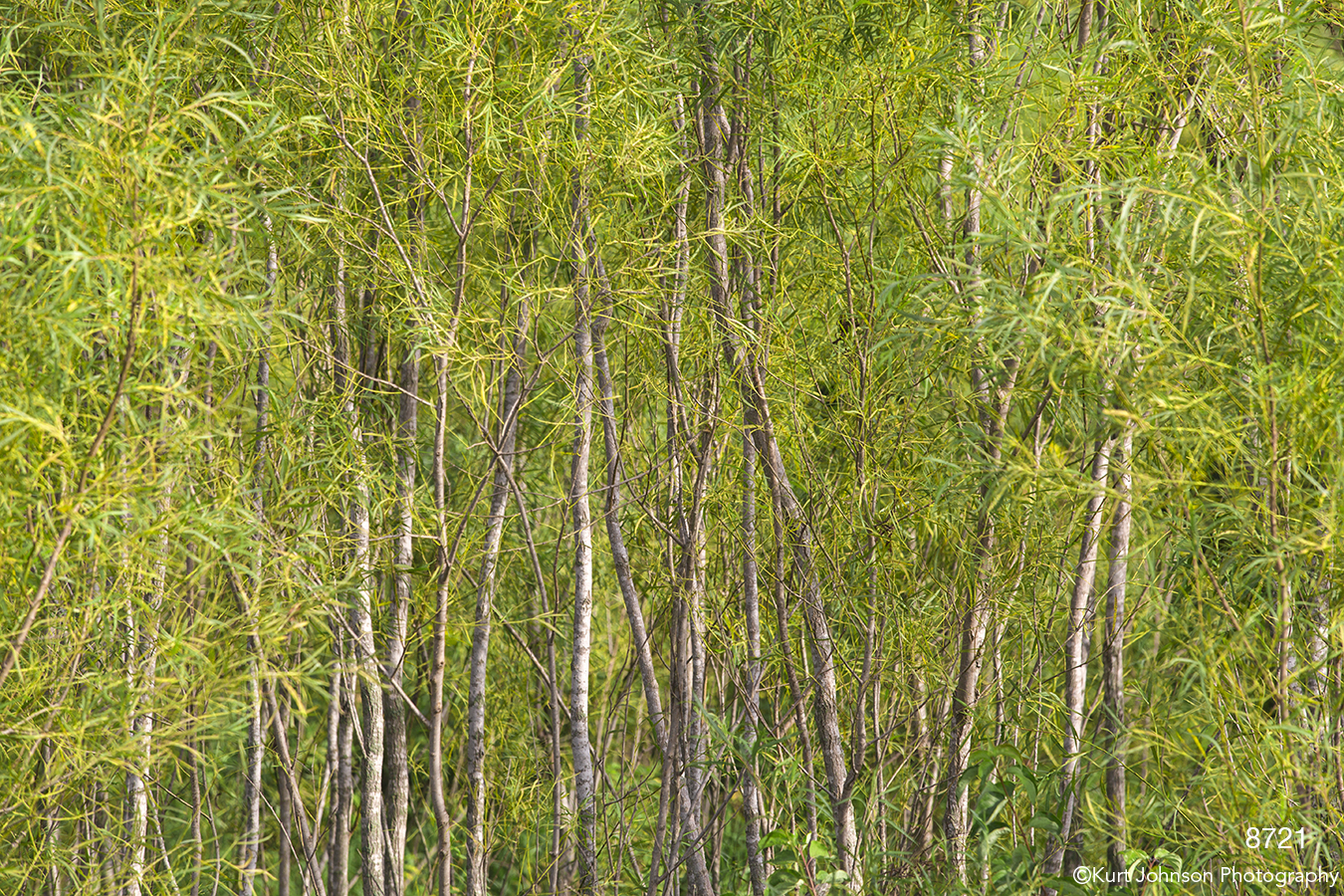 trees leaves green bamboo yellow