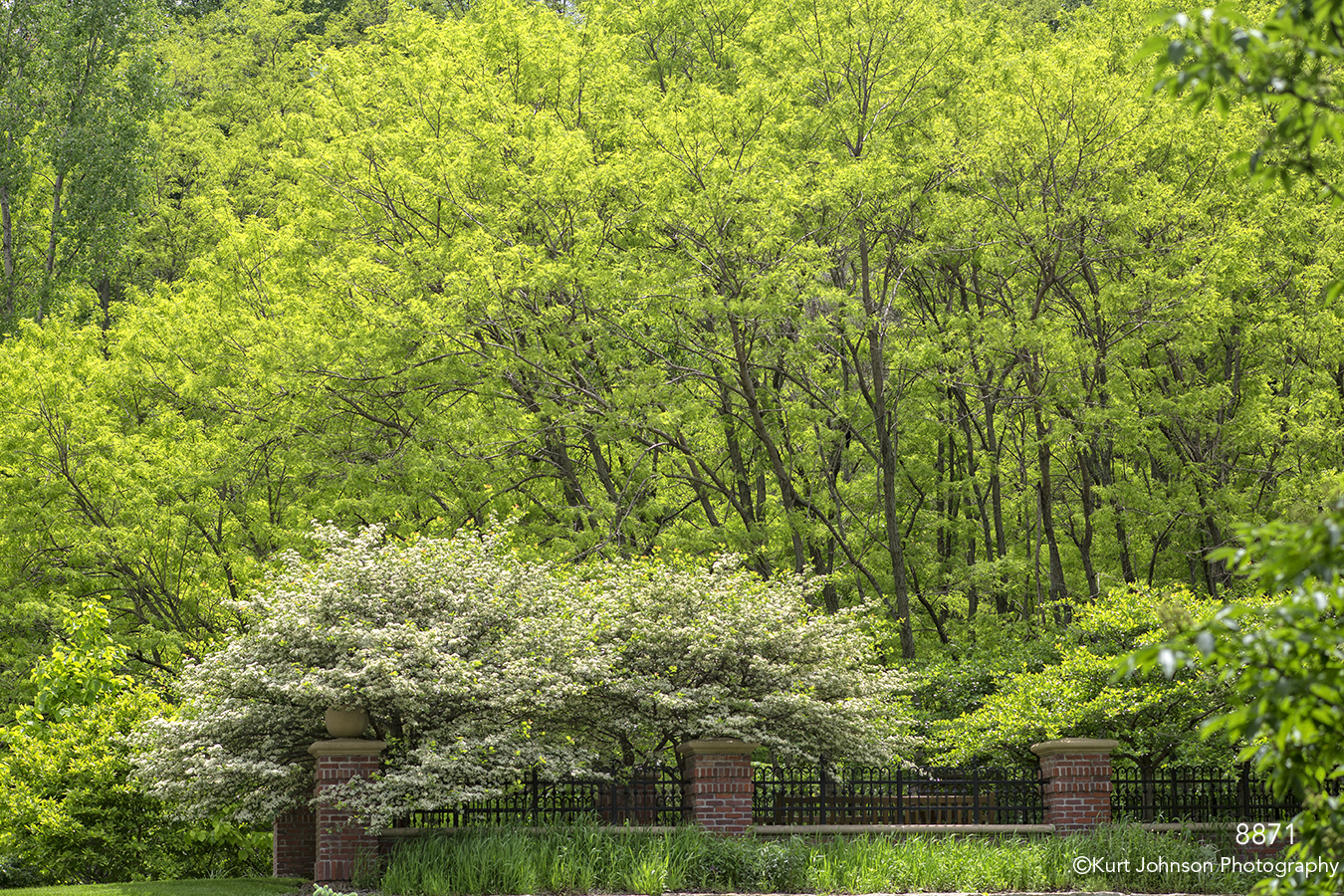 trees leaves green forest woods fence