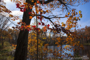 trees fall red orange autumn water landscape