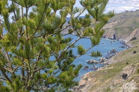 trees pine coastline water landscape