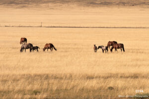 animals landscape grasses horses horse wildlife