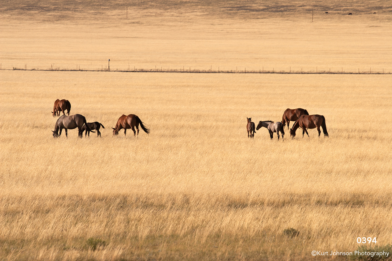 animals landscape grasses horses horse wildlife