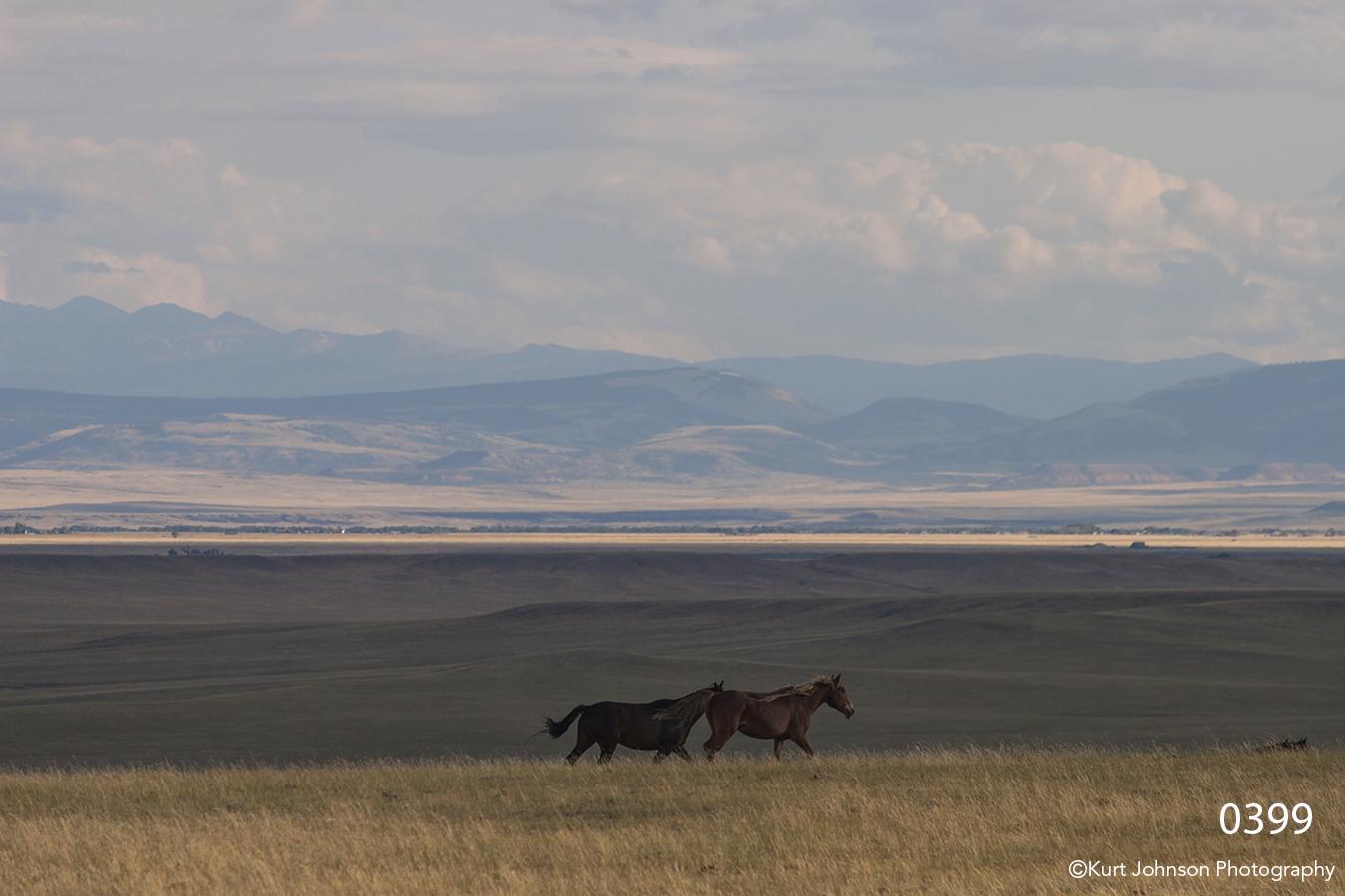 animals landscape horses horse wildlife