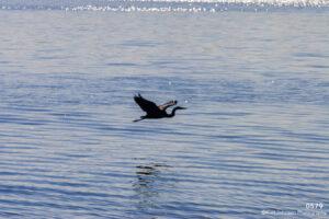 animals landscape water crane wildlife