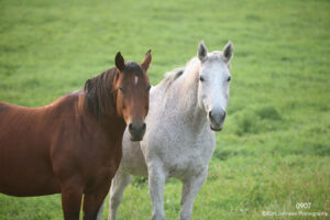 animals horses wildlife grasses green