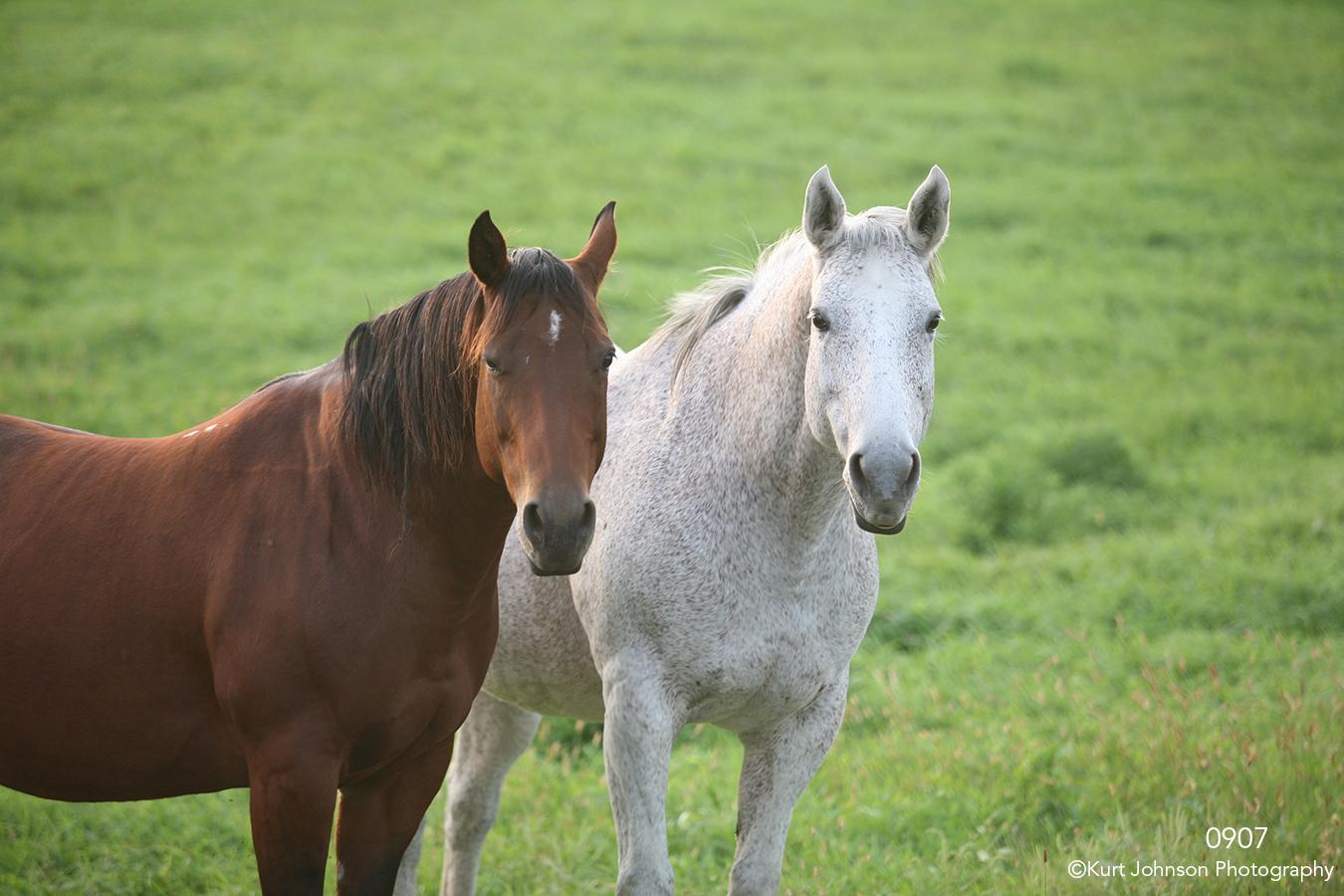 animals horses wildlife grasses green