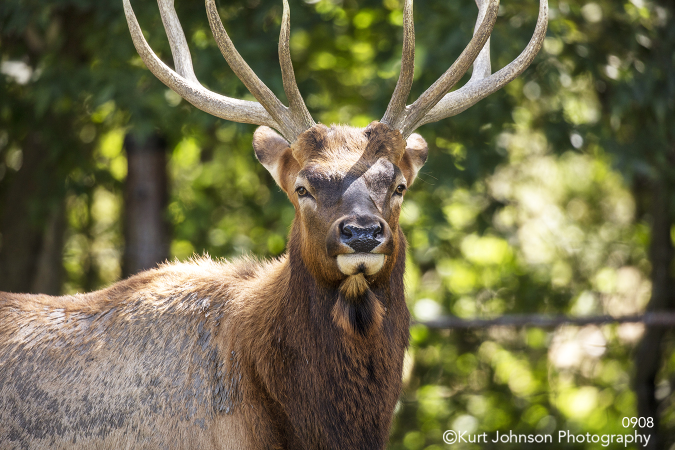 animals elk deer wildlife
