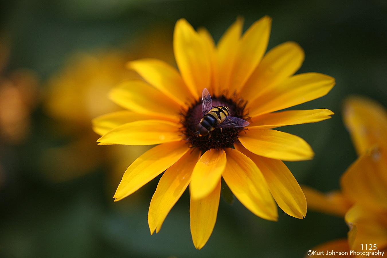 animals flower yellow bee wildlife