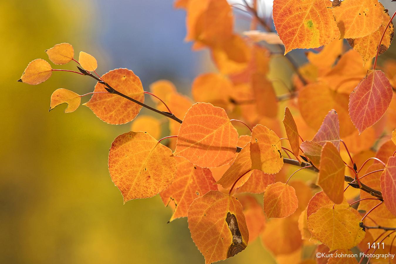 orange leaves tree branches