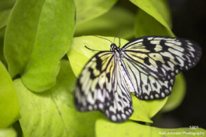 animals wildlife butterfly leaves green