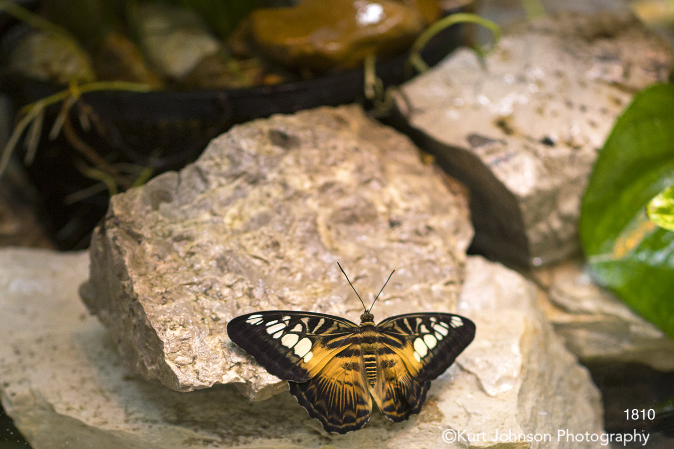 animals wildlife butterfly rocks earthtones brown