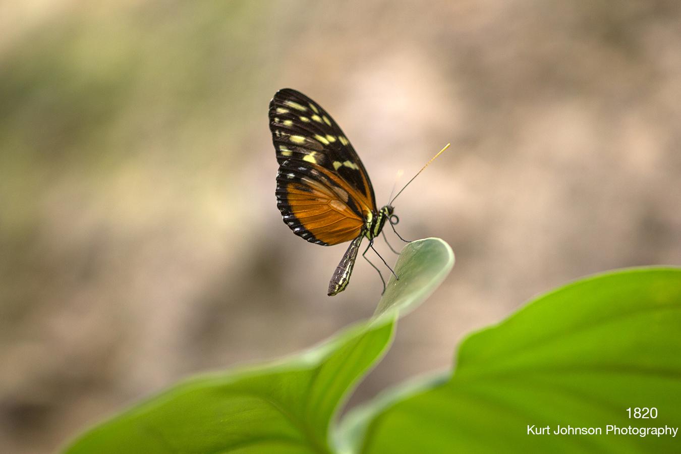 animals wildlife butterfly rocks brown