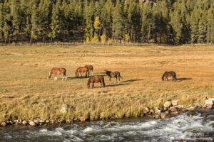 landscape water animals wildlife horses