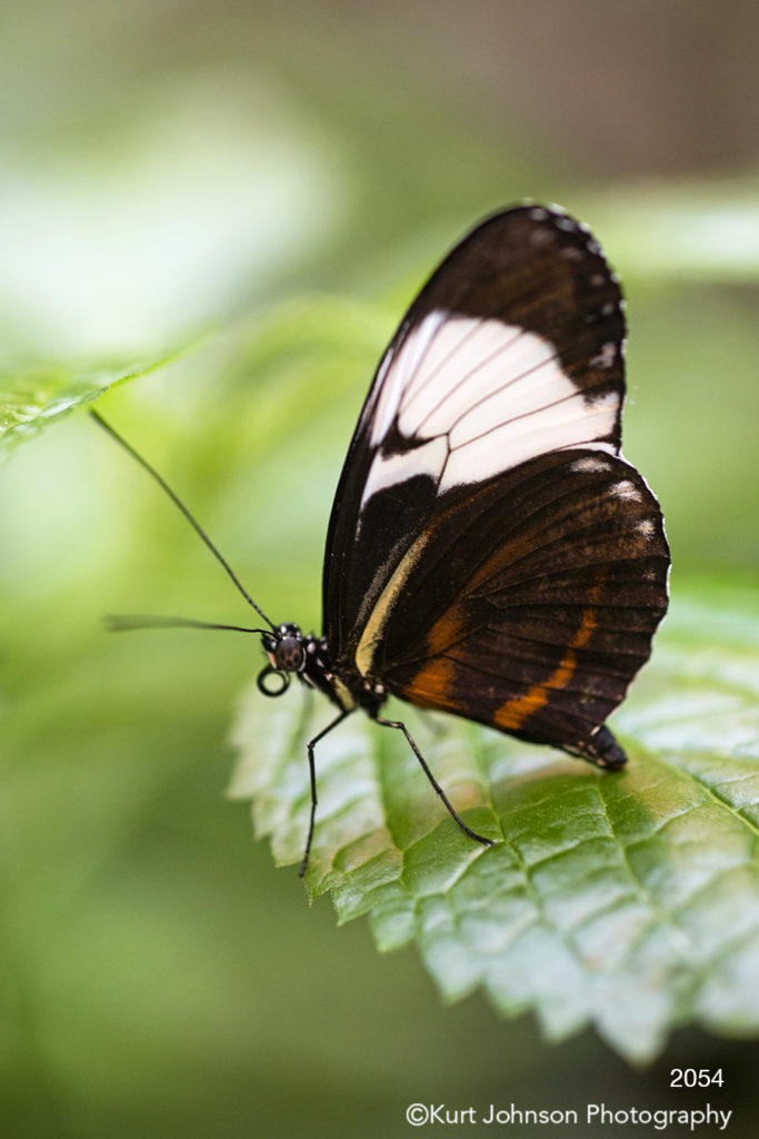 animals wildlife butterfly green leaves