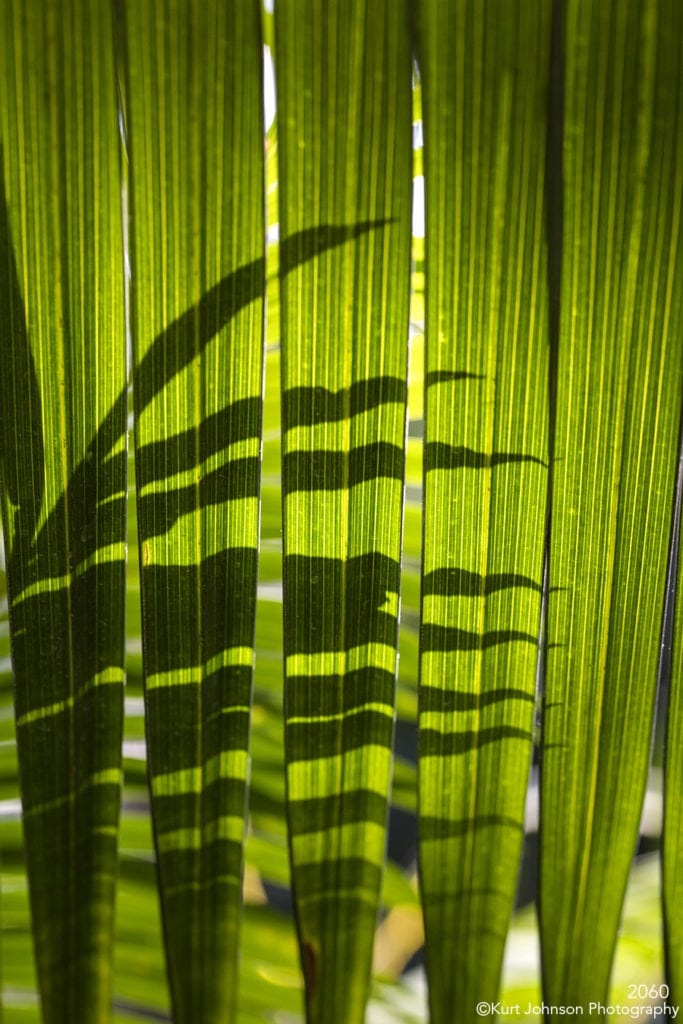 green leaves lines texture shadows