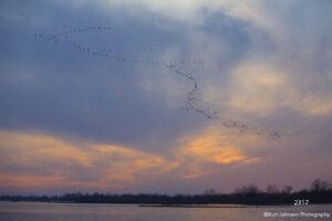 landscape sunset clouds wildlife animals geese