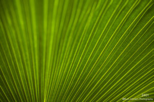texture green leaf lines
