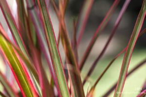 red grasses texture