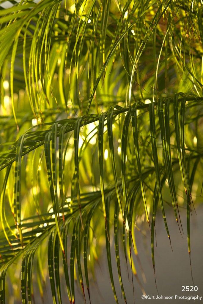 green leaves bamboo tree