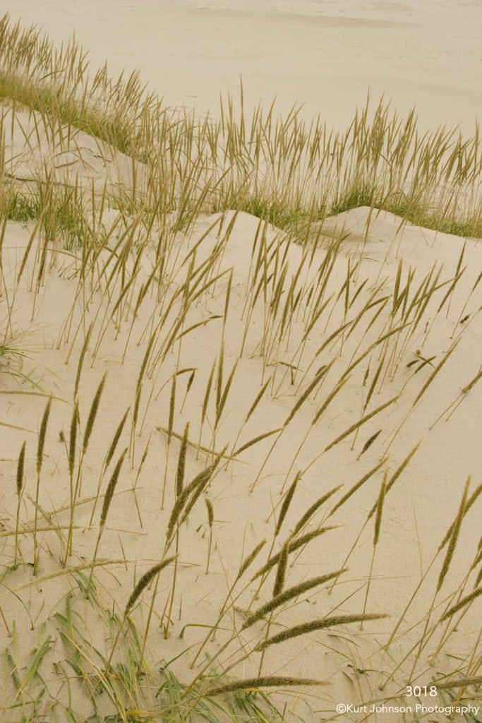sand grasses green brown earthtones