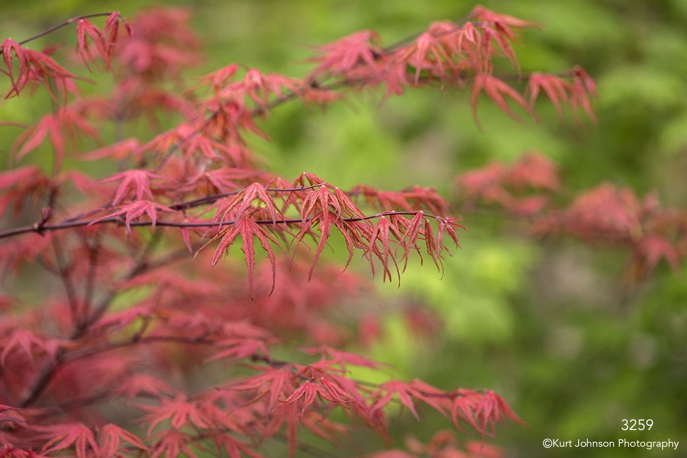 leaves red pink tree green