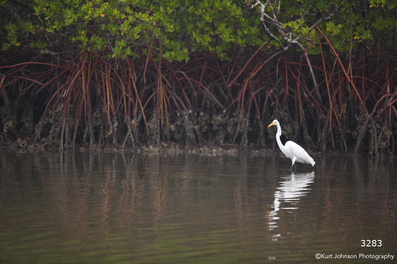 landscape grasses water bird crane