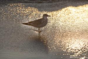 water sunset beach bird wildlife animal