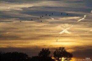 clouds sunset wildlife animals cranes