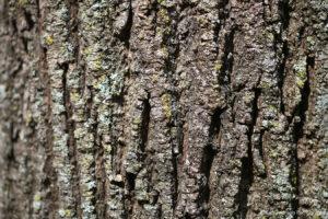texture bark earthtone