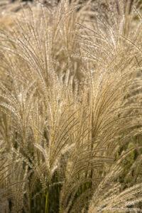 orange grasses texture