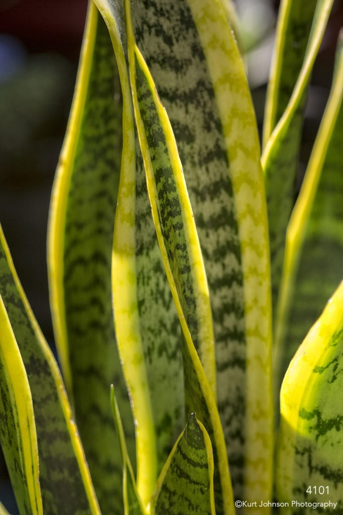 grasses leaves green yellow texture
