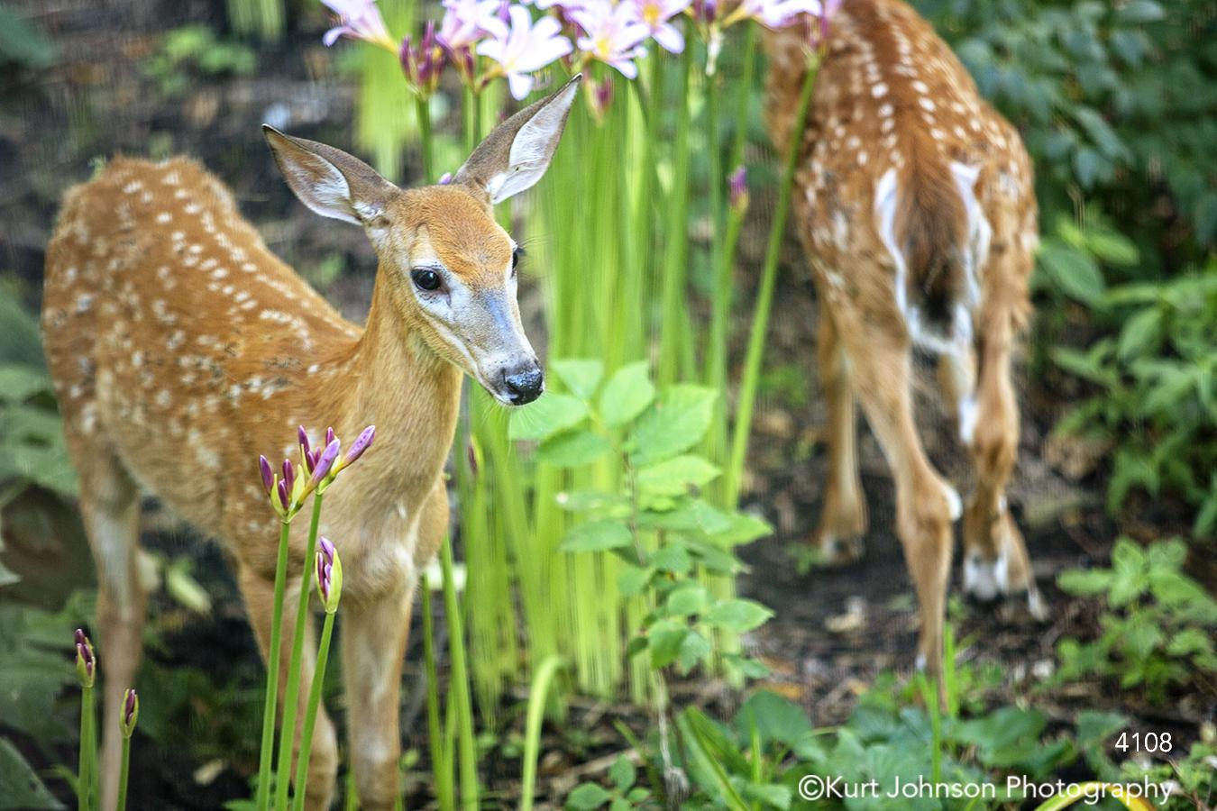 wildlife animal flowers deer grasses