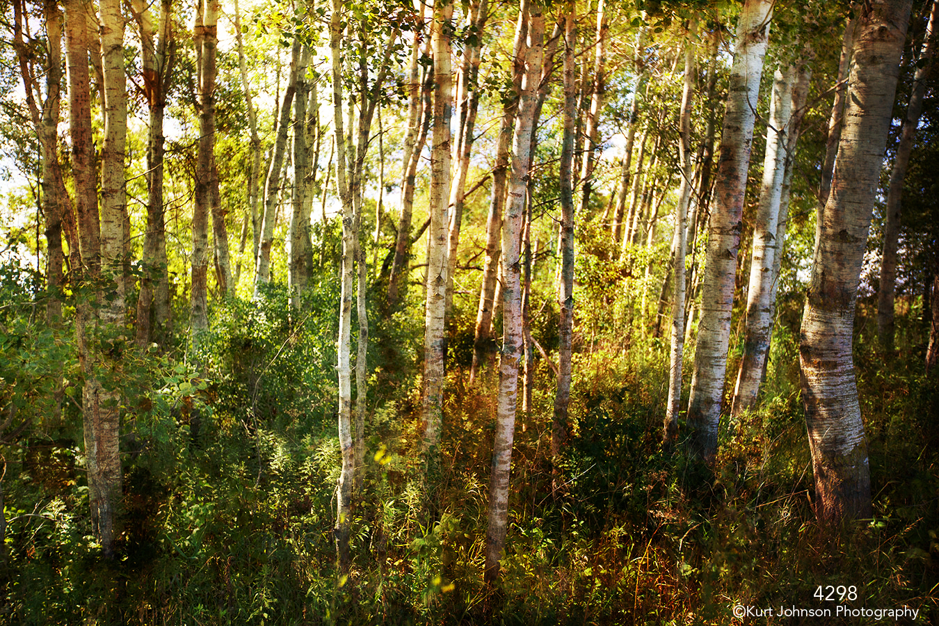 filter interpretations interpretation forest trees birch