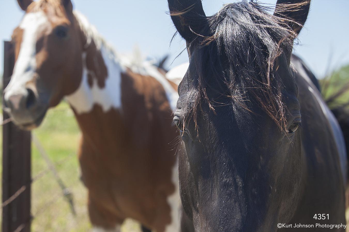 wildlife animals horse