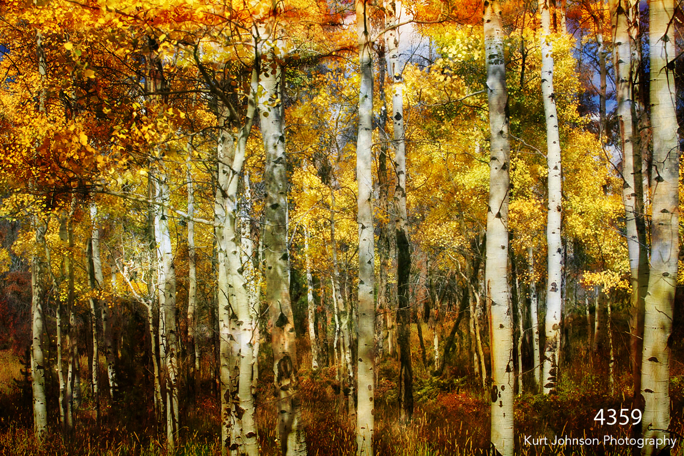 filter interpretations interpretation forest trees birch