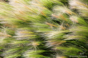 grasses green texture abstract