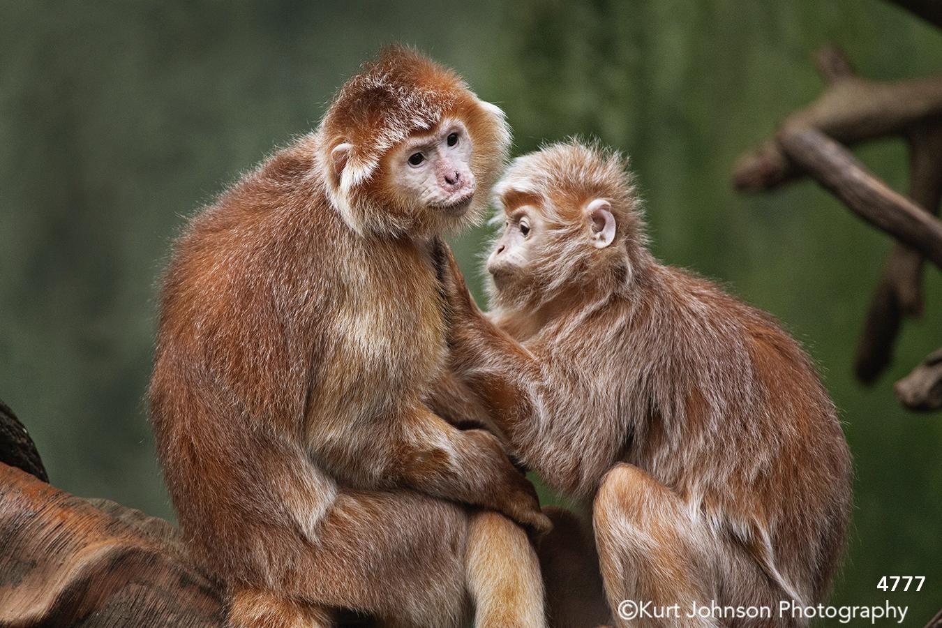 wildlife animal monkey monkeys