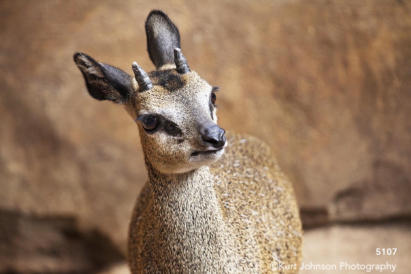 wildlife animal deer